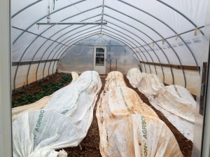 The hoop house are also covered with row cover. Salad mix, kale, onion and leek shoots.