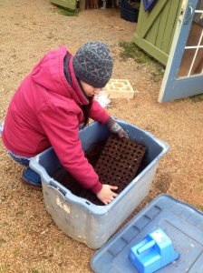 Maria fills the flats with our potting soil mixture.